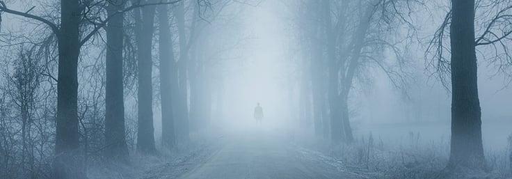Creepy path in foggy woods